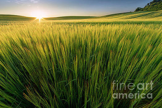 Sunset At The Meadow by Michael Lesiv