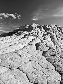The Brain Rocks by Alex Cassels