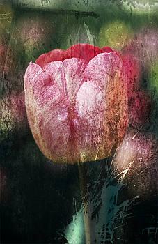 Tulip by Maria Heyens