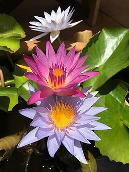 3 Waterlillies by Bonita Hensley