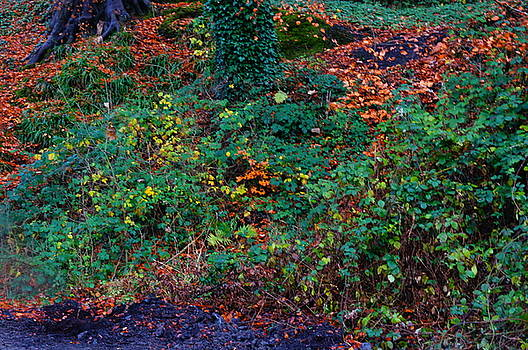 Wet Leaves by Nik Watt