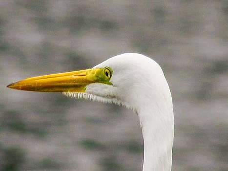White Bird by Cesar Vieira