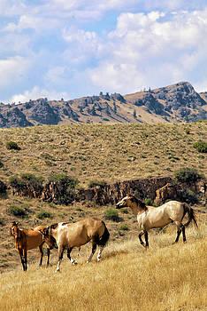 3 Wild Horses, Holter Lake by Michael Gallitelli