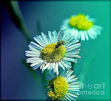 Wildflower by Janice Spivey