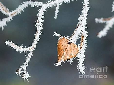 Winter impressions by Katerina Vodrazkova
