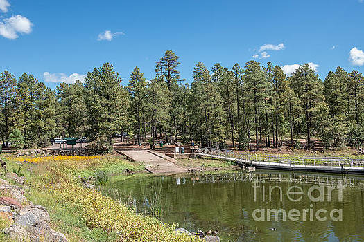 Woodland Lake Pinetop Arizona by Michael Moriarty