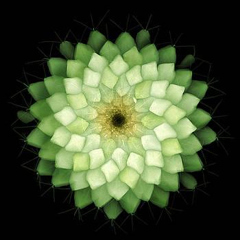Ted Kinsman - X-ray Of Cactus
