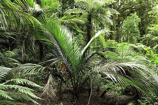 Jungle leaves 1 by Les Cunliffe