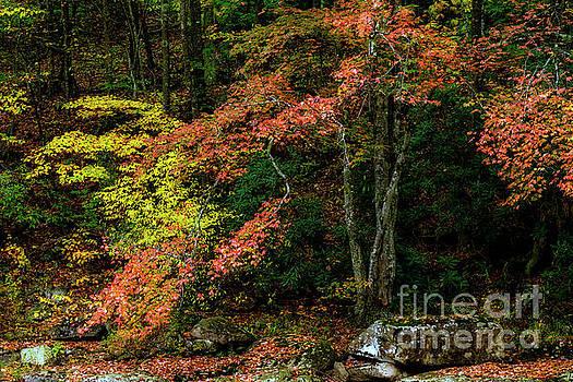 Fall along Williams River by Thomas R Fletcher