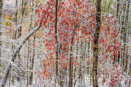 Autumn Snow by Thomas R Fletcher