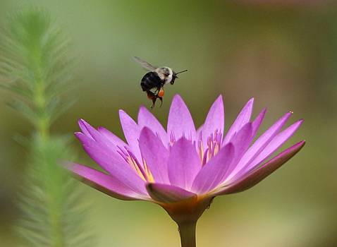 Paulette Thomas - Bee Happy