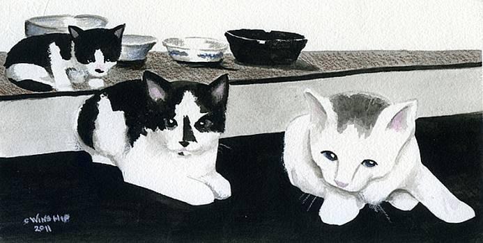 4 Bowls 3 Kittens by Christine Winship
