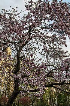 Central Park Spring by Robert J Caputo