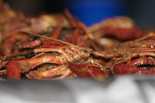 Crawfish by Molly Sider