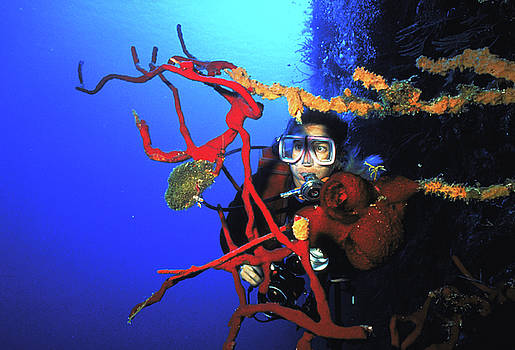 Diving the Wall at Little Cayman by Carl Purcell