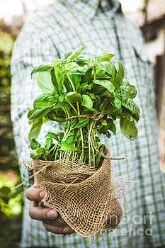 Farmer with herbs by Mythja Photography