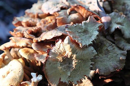 Fungus by Billie Earley