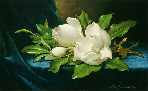 Martin Johnson Heade - Giant Magnolias on a Blue Velvet Cloth