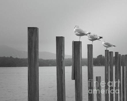 4 Gulls by Mim White