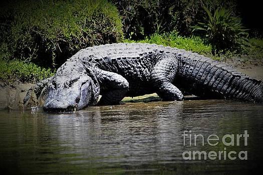Huge Alligator by Paulette Thomas