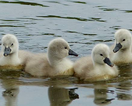 4 In A Row by Sarah Fowle