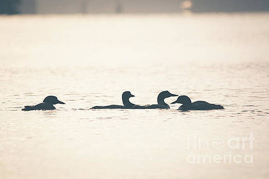 4 Loon Silhouettes by Cheryl Baxter