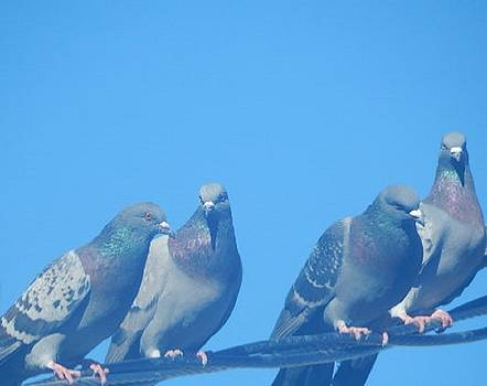 4 Pigeons on the Line by Mozelle Beigel Martin