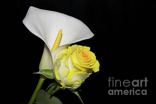 Rose With Calla by Elvira Ladocki