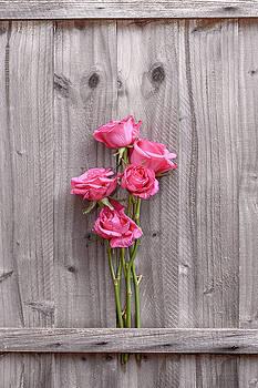 Svetlana Sewell - Roses