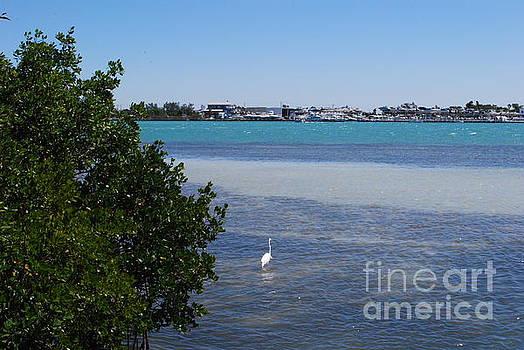 Gary Wonning - Sarasota Bay