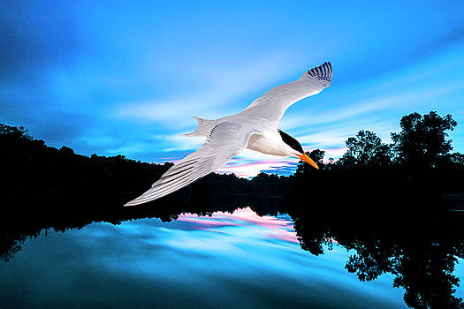 Seagull Flying In Action by Fernando Cruz