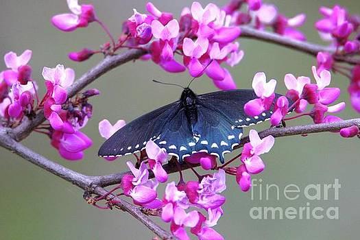 Spring by Irina Hays