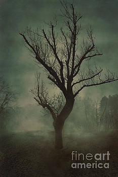 Tree by Mythja Photography