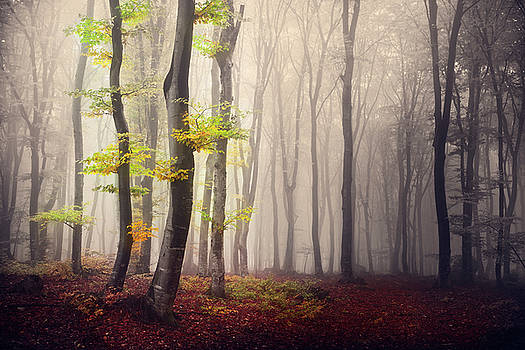 4 Trees into the light by Toma Bonciu