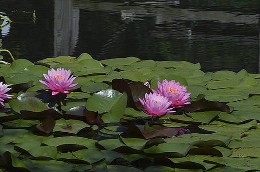 Water Lilies by Linda Geiger