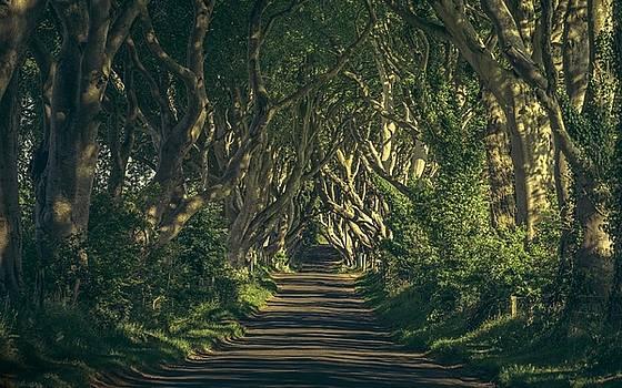 Road by Dorothy Binder
