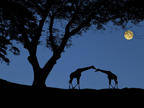 4443 by Peter Holme III
