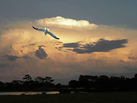 4445 by Peter Holme III