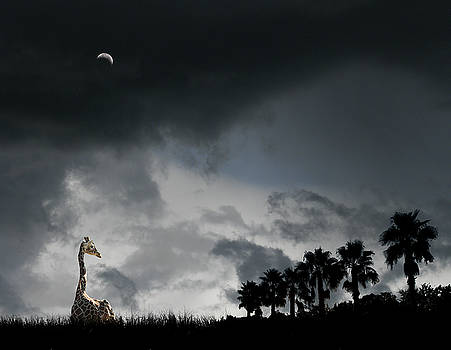 4458 by Peter Holme III