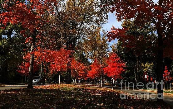 Autumn Beauty  by R Mahlouji