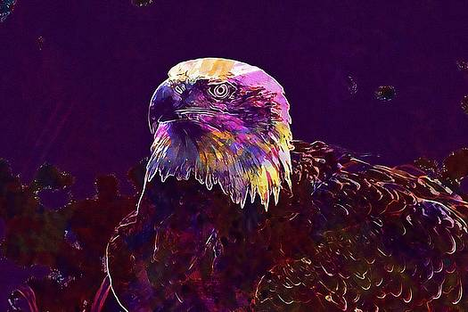 Bald Eagle Haliaeetus Leucocephalus  by PixBreak Art