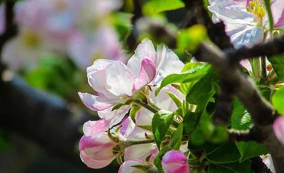 Beautiful Flower by Cesar Vieira