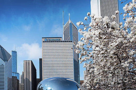 Chicago Bean Millenium Park by Jim DeLillo