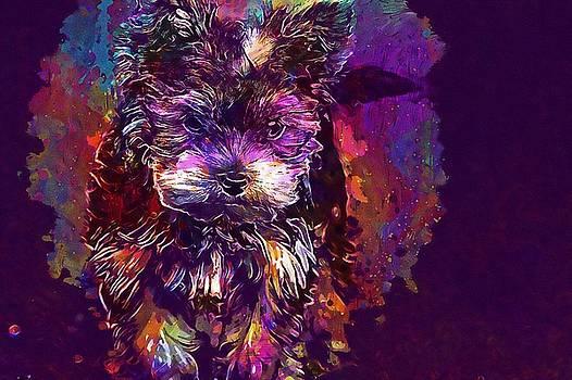 Dog Puppy Yorkshire Terrier  by PixBreak Art
