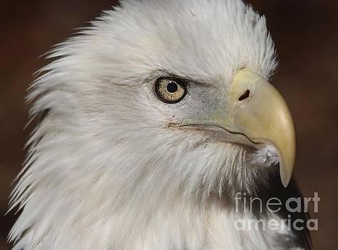 Paulette Thomas - Eagle