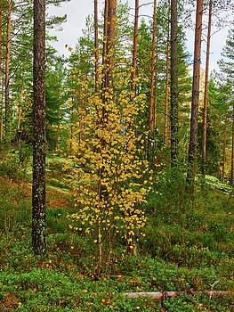 Fall by Jouko Lehto