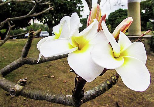 Flowers by Cesar  Vieira