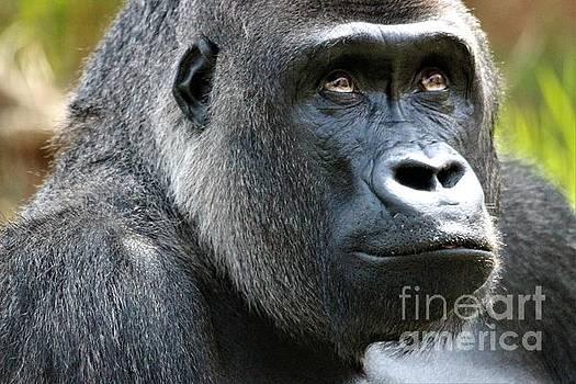 Gorilla by Paulette Thomas