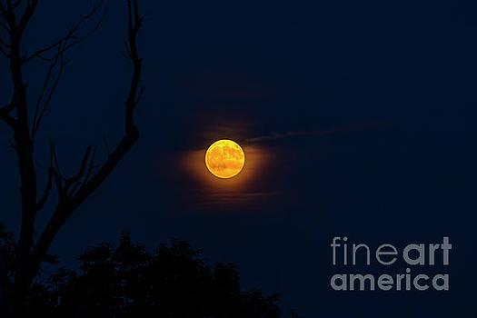 Highland Moon  by Thomas R Fletcher