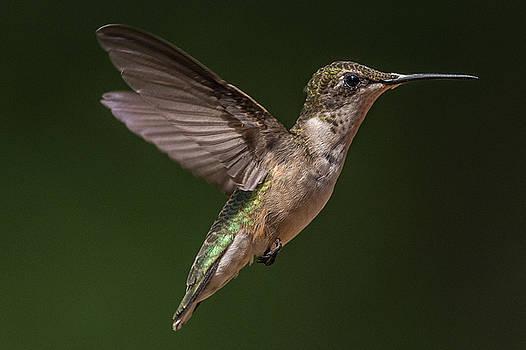 Hummingbird by Mike Watts